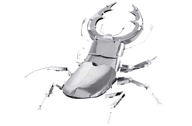 Picture of Stag Beetle