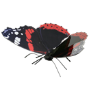 Picture of Red Admiral