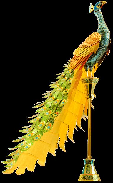 Picture of Premium Series Peacock